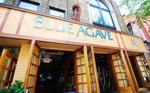 Blue-Agave